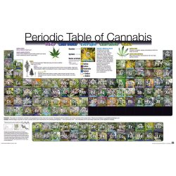 GBeye Periodic Table of Cannabis Poster 91 5x61cm